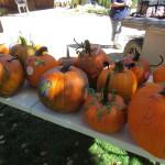 Artistic Pumpkins!